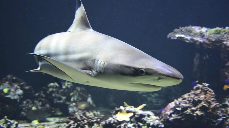 Ανθρώπινο χέρι βρέθηκε σε κοιλιά καρχαρία – Το αναγνώρισαν από τη βέρα στα δάχτυλά του
