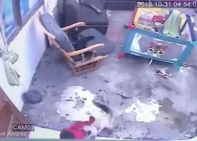 Γάτα - υπερήρωας σώζει τη ζωή βρέφους προτού κατρακυλήσει από σκάλα