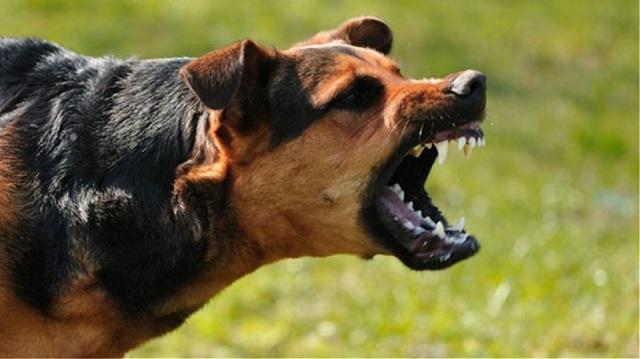 Σε σοβαρή κατάσταση 9χρονος ύστερα από επίθεση σκύλων