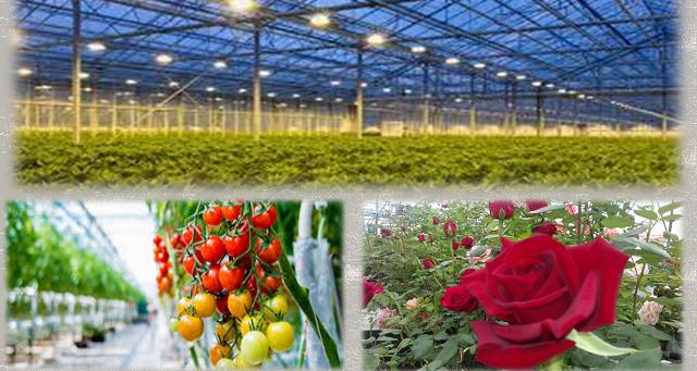 Ημερίδα στη Γεωπονική για την παραγωγή λαχανοκομικών και ανθοκομικών προϊόντων