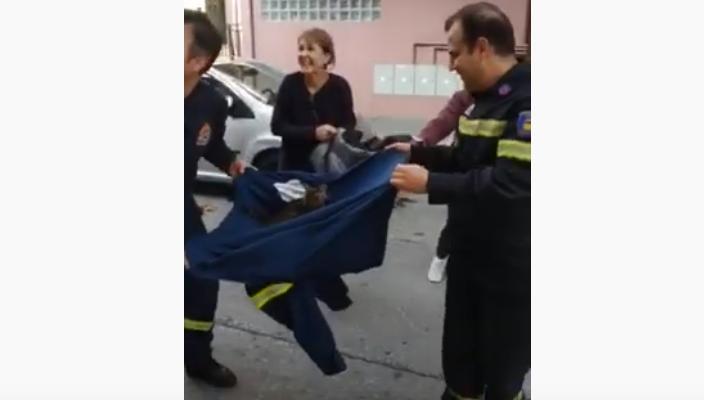 Δίχτυ σωτηρίας πυροσβεστών για γατάκι στον Βόλο