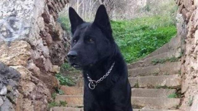 Το «αντίο» της ΕΛΑΣ στον αστυνομικό σκύλο Blacky