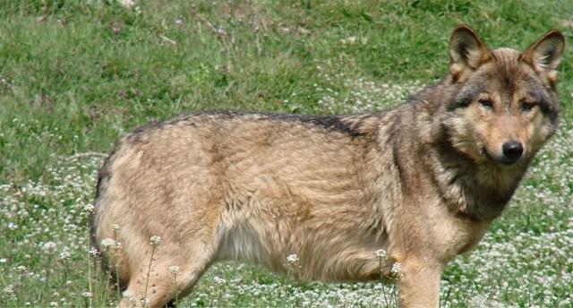 «Νύχτα των Λύκων» στην Καλαμιά Κοζάνης: Κλειδώθηκαν σε καφενείο οι κάτοικοι