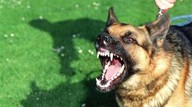 Πατήσια: Ηλικιωμένη πέθανε και την έφαγαν τα σκυλιά της