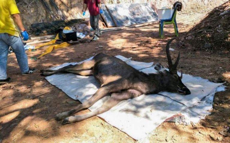 Ταϊλάνδη: Νεκρό ελάφι είχε επτά κιλά πλαστικό και σκουπίδια στο στομάχι του