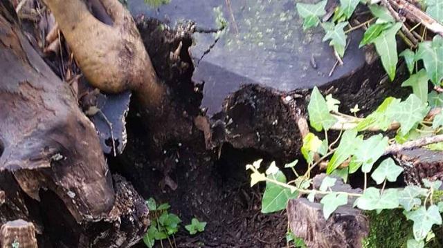Κέρκυρα: Έθαψε στο έδαφος μισό κιλό ηρωίνης