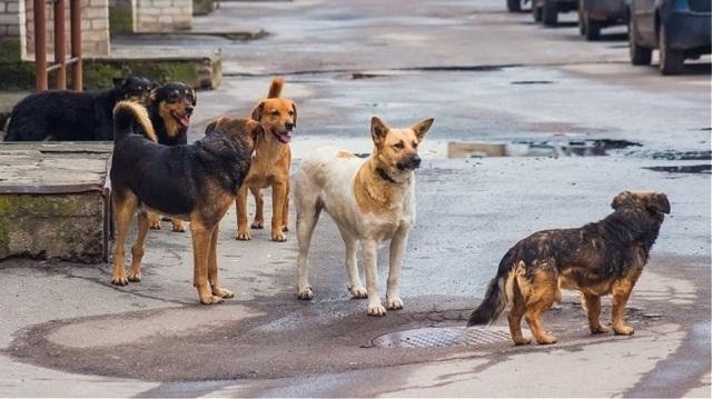 Πρόταση για δημιουργία καταφυγίου  αδέσποτων ζώων στο Νεοχωράκι