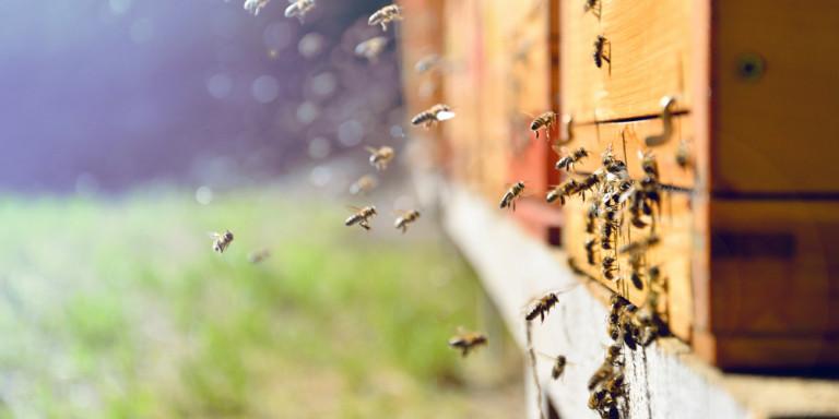 Η ΕΕ απαγόρευσε τη χρήση εντομοκτόνου που θεωρείται επιβλαβές για τις μέλισσες