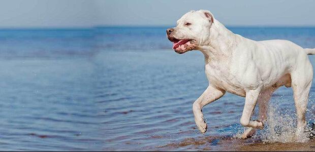 Σοκ στα Καλά Νερά: Σκύλος κατασπάραξε την ιδιοκτήτριά του