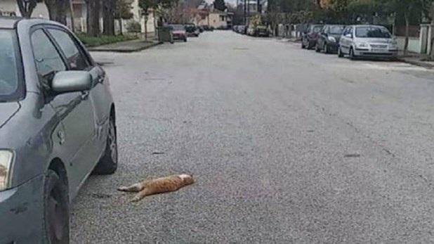 Επικήρυξαν τους δράστες για τις δεκάδες νεκρές γάτες από φόλες στα Τρίκαλα