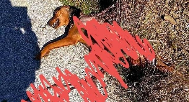 Σκότωσαν και έγδαραν σκύλο στο Φυτόκο!
