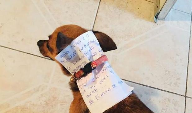 Βρισκόταν σε καραντίνα κι έστειλε τον σκύλο του για ψώνια