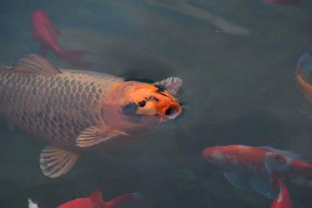 Κορονοϊός: Τα… ψάρια που έχουν στις γυάλες βγάζουν βόλτα οι Ρουμάνοι