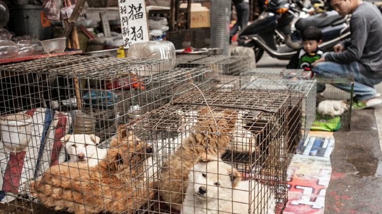 Προς απαγόρευση η κατανάλωση κρέατος σκύλου & γάτας στην Κίνα
