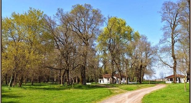 Διατηρητέο μνημείο της φύσης το δάσος Παναγίας στο Βαλτινό Τρικάλων