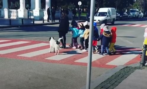 Αδέσποτο σκυλί ρυθμίζει την κυκλοφορία και σταματά τα αυτοκίνητα για να περάσουν οι πεζοί