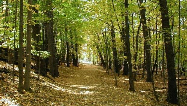 Έρευνα: Η κλιματική αλλαγή επηρεάζει τα δάση της γης και «χαμηλώνει» τα δέντρα