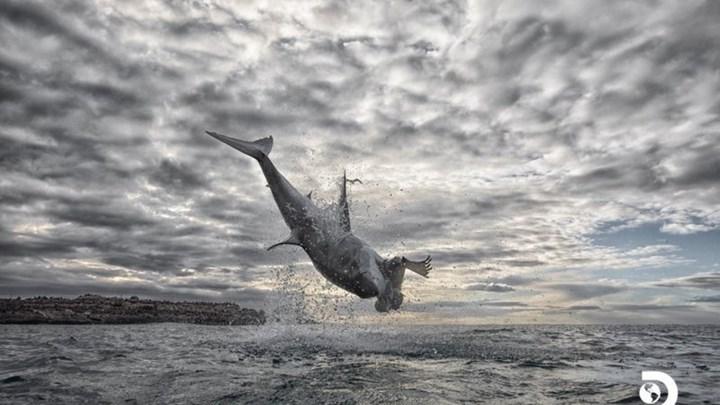 """""""Άλμα"""" ρεκόρ 4,5 μέτρων από λευκό καρχαρία - Εντυπωσιακό βίντεο από drone"""