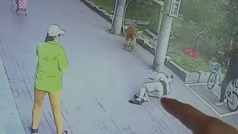 Γάτα πέφτει από τον 6ο όροφο κτηρίου & αφήνει αναίσθητο έναν ηλικιωμένο