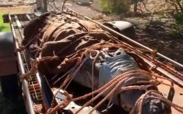 Τεράστιος κροκόδειλος 349 κιλών πιάστηκε στην Αυστραλία