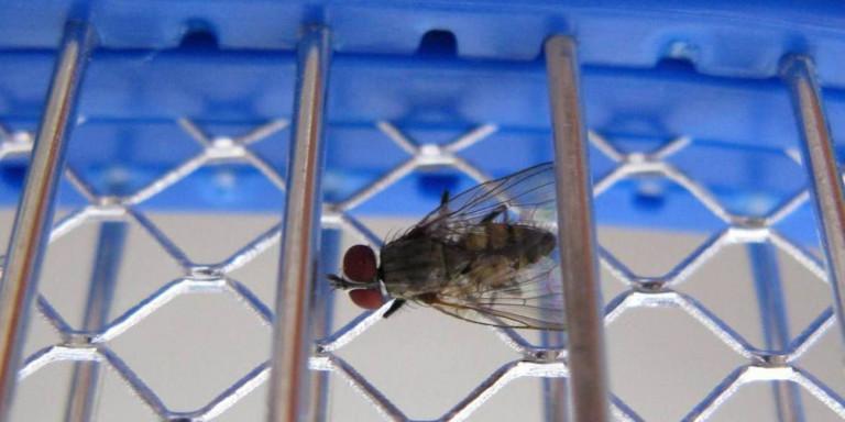 Συνταξιούχος πήγε να σκοτώσει μια… μύγα και τίναξε την κουζίνα του σπιτιού στον αέρα!