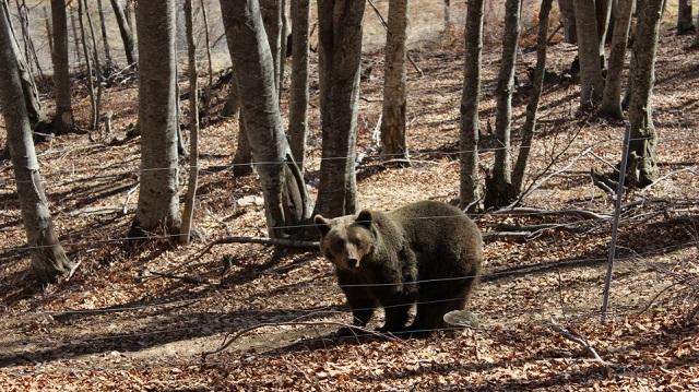 Νεαρή αρκούδα νεκρή μετά από τροχαίο στην Καστοριά