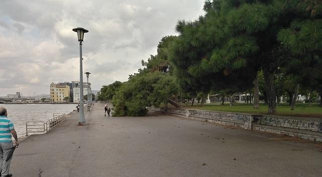 Λαμαρίνα ξηλώθηκε –Δέντρα έπεσαν σε Βόλο και Νέα Ιωνία