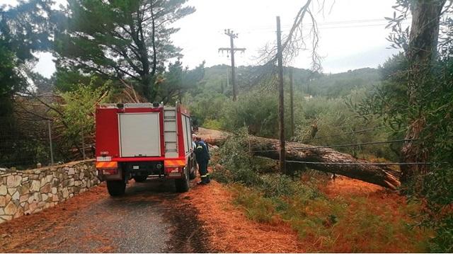 Κέρκυρα: Σοβαρά προβλήματα από την κακοκαιρία -Κλειστά σχολεία, διακοπές ρεύματος και πτώσεις δέντρων [βίντεο]