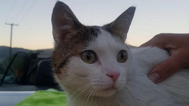 Περσέας: Ο πρώτος γάτος στην Ελλάδα με τεχνητά πόδια κάνει τα πρώτα του βήματα