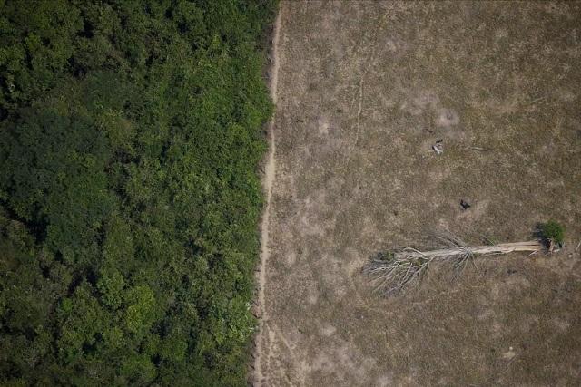 Καταστρέφεται ο Αμαζόνιος: Κόψιμο δέντρων με ρυθμούς – ρεκόρ το 2020