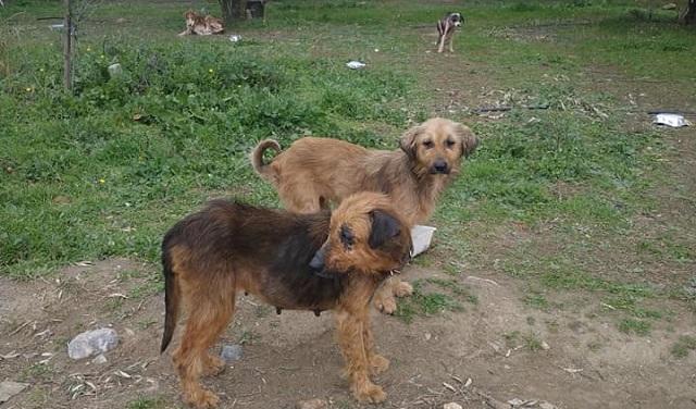 Συναγερμός για σκελετωμένους σκύλους στη Νέα Αγχίαλο