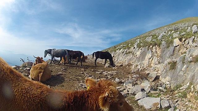 Ψυχρολουσία για ομάδα κτηνοτρόφων του Δήμου Ρ. Φεραίου