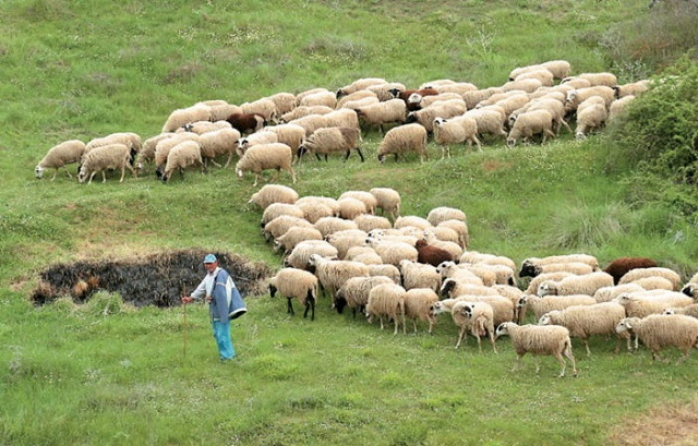 Ρύθμιση δόσεων για κτηνοτρόφους των Καναλίων και Κεραμιδίου