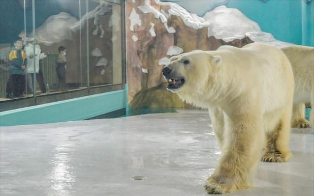 Ξενοδοχείο με πολικές αρκούδες