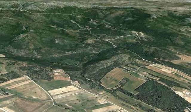 Καλλιέργειες έγιναν… δάση στο Πουρί