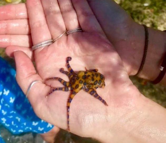 Κρατούσε στα χέρια της ένα από τα πιο θανατηφόρα ζώα του κόσμου (και δεν το ήξερε)