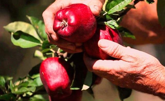 Ζητούν 100% αποζημίωση από ΕΛΓΑ οι αγρότες του Αν. Πηλίου