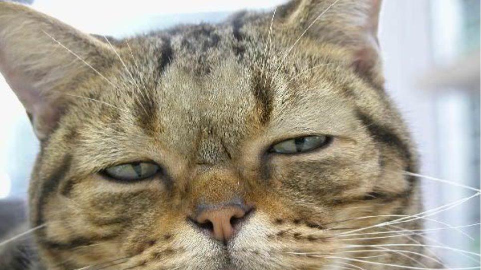 Παναμάς : Γάτος – βαποράκι «συνελήφθη» έξω από φυλακή