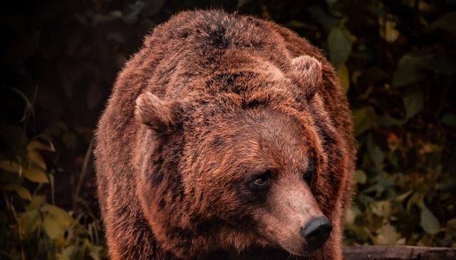 «Δεν είμαι το φαγητό σου»: Άνδρας ξεφεύγει από αρκούδα με… διαπραγματεύσεις [βίντεο]