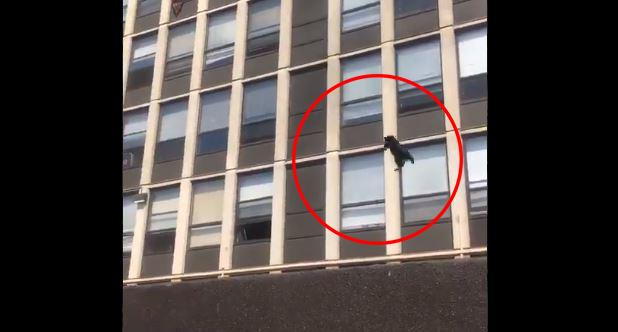 Εφτάψυχη γάτα: Έπεσε από τον 5ο όροφο φλεγόμενου κτιρίου & προσγειώθηκε ατάραχη