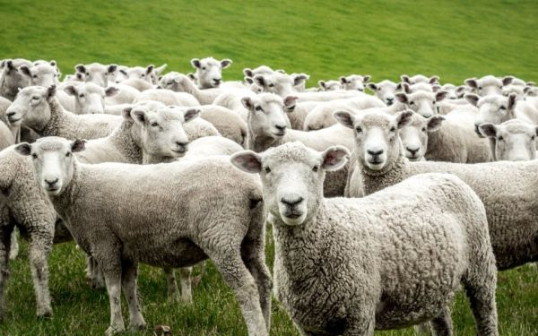 Αδειοδότηση για κτηνοτροφική εγκατάσταση