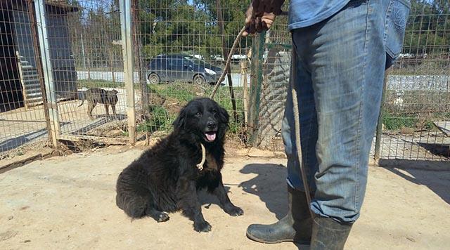 Εκκληση για υιοθεσίες ζώωνΑπό τη Φιλοζωική Ομάδα Αλμυρού «Αγάπη και Προστασία»
