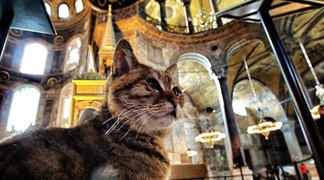 Viral η διαφήμιση για τα μέσα μεταφοράς με πρωταγωνιστές τις περίφημες γάτες της Κωνσταντινούπολης