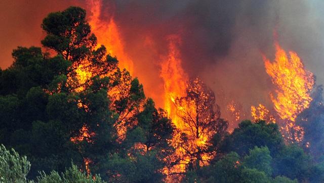 Τι προβλέπει ο Ιόλαος για την αντιμετώπιση έκτακτων αναγκών από δασικές πυρκαγιές στη Θεσσαλία