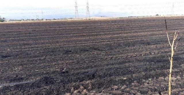 «Καμένη γη» στην Αγία Παρασκευή Λάρισας: Κάηκαν στρέμματα σιτηρών, απειλήθηκαν εγκαταστάσεις (φωτό και βίντεο)