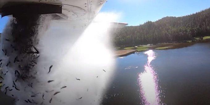 Στη Γιούτα κάθε καλοκαίρι βρέχει πέστροφες -Ο αντισυμβατικός ανεφοδιασμός λιμνών με ψάρια από αέρος