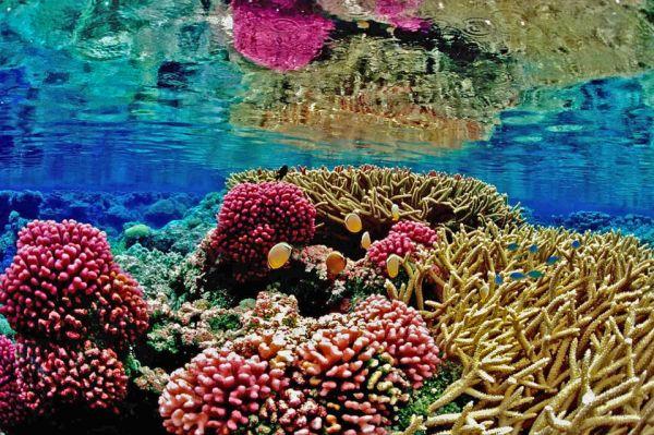 H Αυστραλία νίκησε στην κόντρα με την UNESCO για την υποβάθμιση του Μεγάλου Κοραλλιογενούς Φράγματος