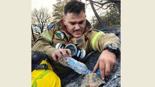 Πυροσβέστης δίνει νερό σε χελωνάκι μετά τη φωτιά στην Αχαΐα