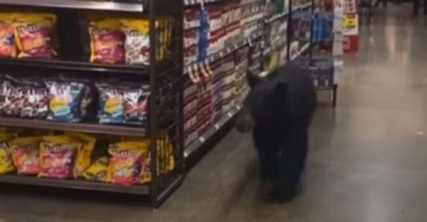 Λος Άντζελες: Αρκούδα πήγε για «ψώνια» σε σούπερ μάρκετ αλλά έφυγε άπραγη