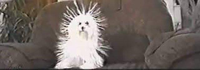 Ο σκύλος ...σκαντζόχοιρος!